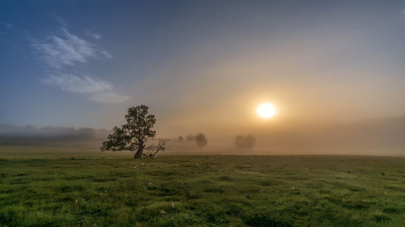 утро, туман, рассвет, дерево Надо меньше спатьphoto preview