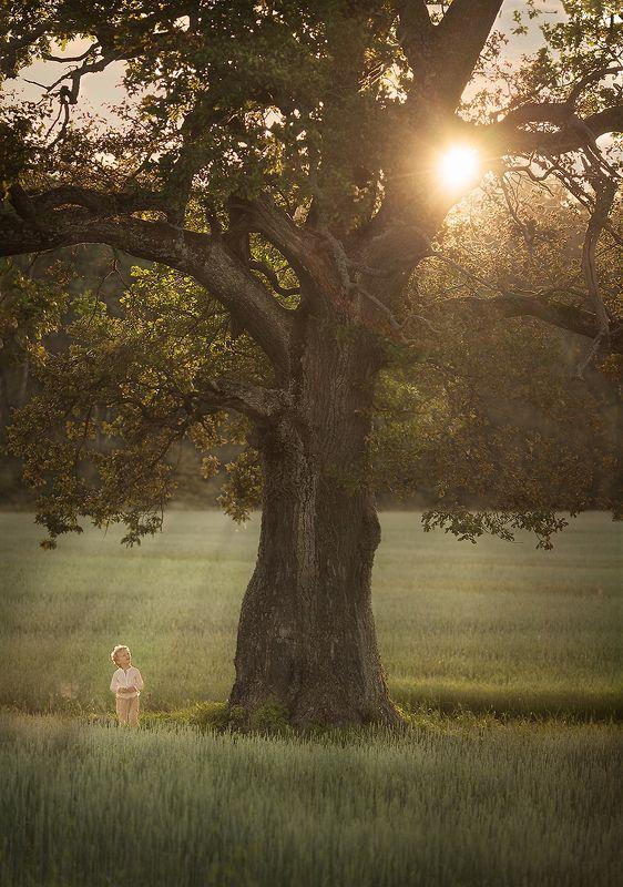 природа, деревья, солнце, лучи, свет, детство, дети Древо Жизниphoto preview