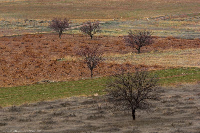 Природа, Дерево, Пейзаж, Сцена, Африка, Поле, Трава, Саванна, Сухая, Равнина, Пустыня, Небо, Луг, Турция, Гереме, Каппадокия, зеленый, коричневый, серый Studying Arithmancy - Изучая арифмантиюphoto preview