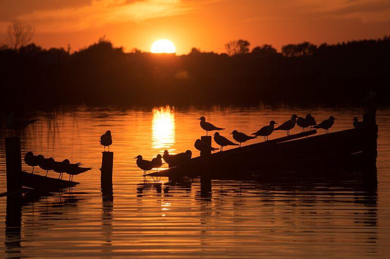 волга, закат, птицы Вечер на Волгеphoto preview
