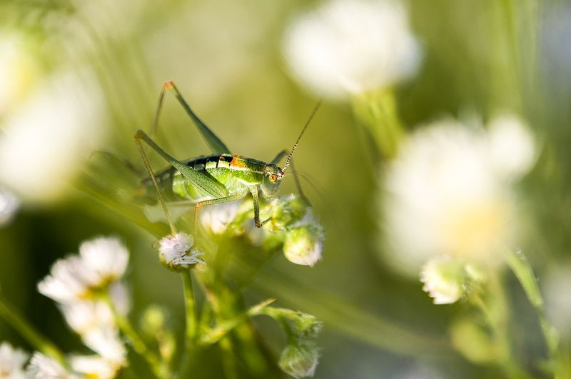 Grasshopper in contrastphoto preview
