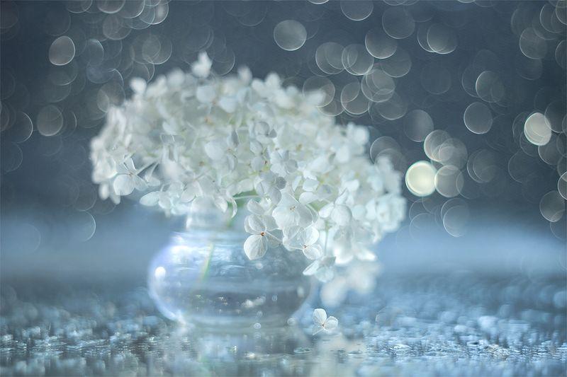 hortensja,kwiaty,martwa natura,bokeh,przyroda,natura Hortensja białaphoto preview