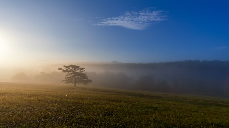 утро, рассвет, восход, туман, лучи Одинокое облако над одинокой сосной. Перед одиноким фотографомphoto preview