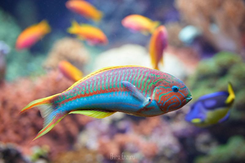 fish, underwater,  ***photo preview