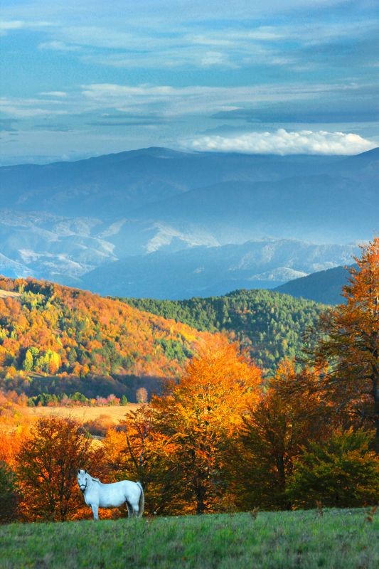 serbia, autumn, nature, color, animal, horse, white horse, landscapes, mountains, valleys, balkan, сербия, осень, природа, цвет, животное, лошадь, белая лошадь, пейзажи, горы, долины, балканские, Hey Autumn, welcome to Serbia !photo preview