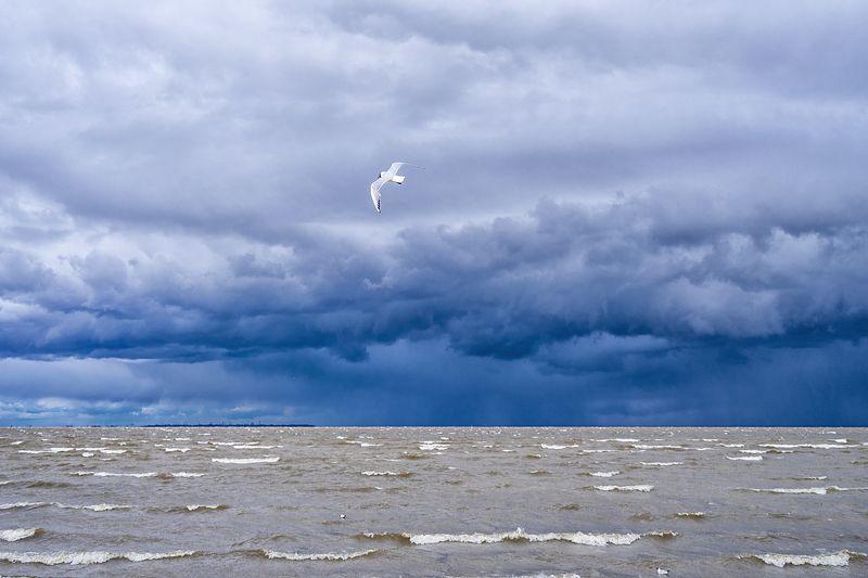 море чайка небо шторм пейзаж Небо над Финским заливомphoto preview