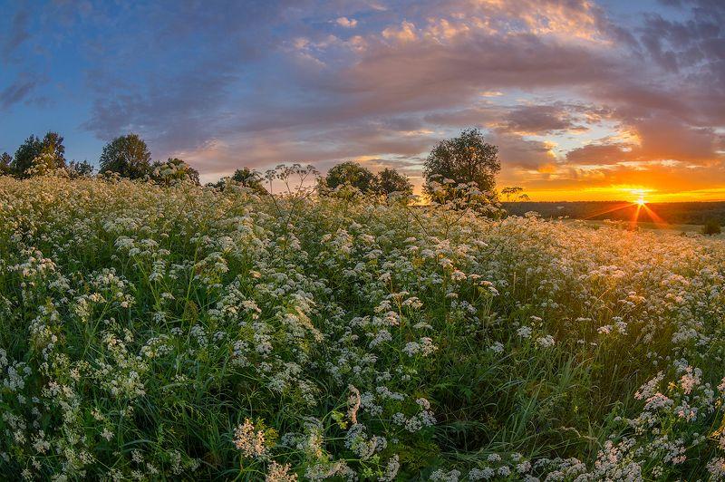 рассвет цветы дягиль утро солнце луг трава феерия рассветаphoto preview