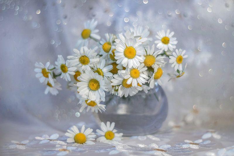 kwiaty,polne,rumianek,lato,bokeh,martwa natura, flowers, nature, still live Rumian polnyphoto preview