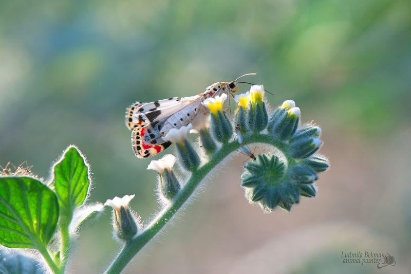 бабочка, июль, утро Июль - макушка летаphoto preview