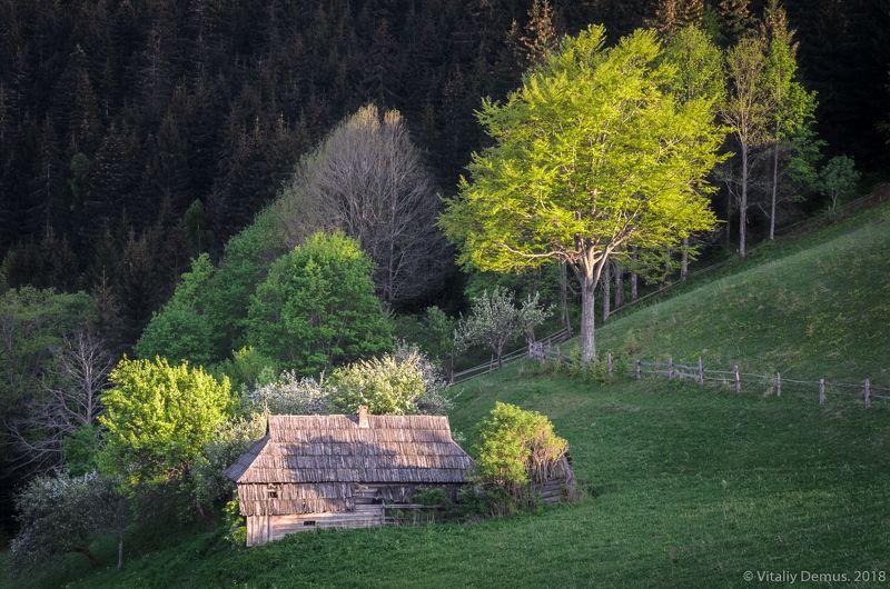 весна, горы, зелень, закат, свет, вечер, дом Дом на холме. Карпаты. Покуття.photo preview