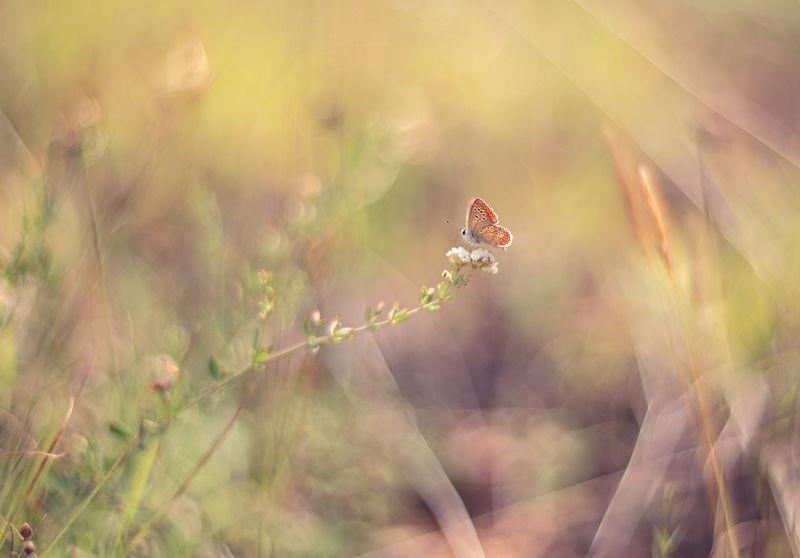 Летняя сказка...photo preview