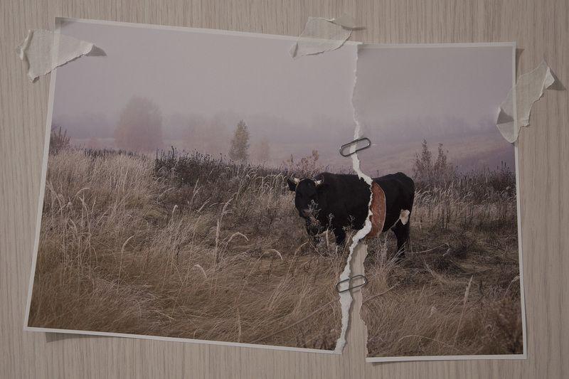 Короваphoto preview