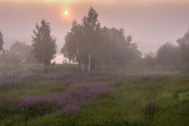 Лето,природа,пейзаж,утро,восход,река,туман Туманный рассветphoto preview