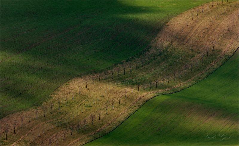 южная моравия,пейзаж,hils,биолента,линии,south moravian,lines,свет,czech,веснa,чехия,landscapes. Пёстрая лентаphoto preview