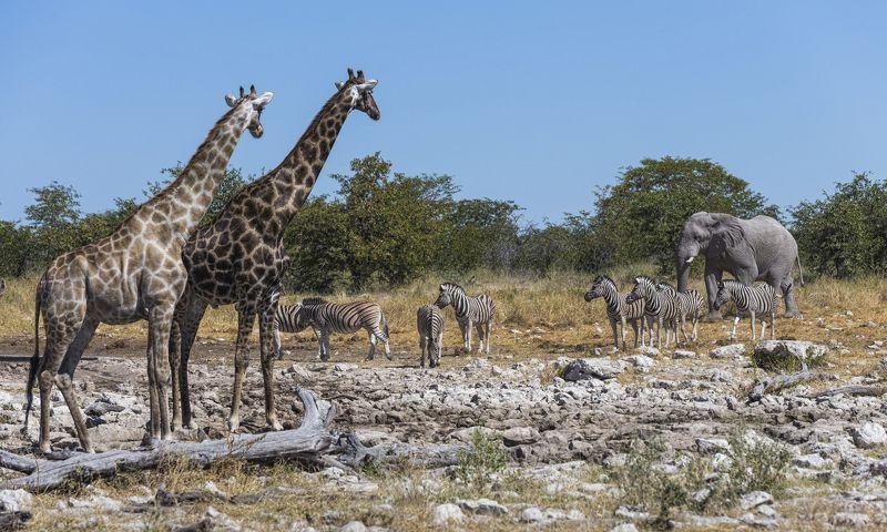 Намибия Этошаphoto preview