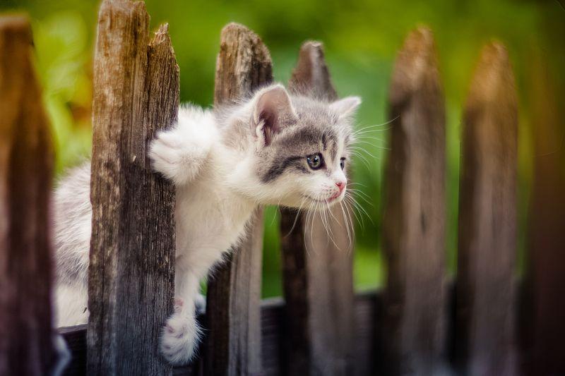 кот кошка лето ***photo preview