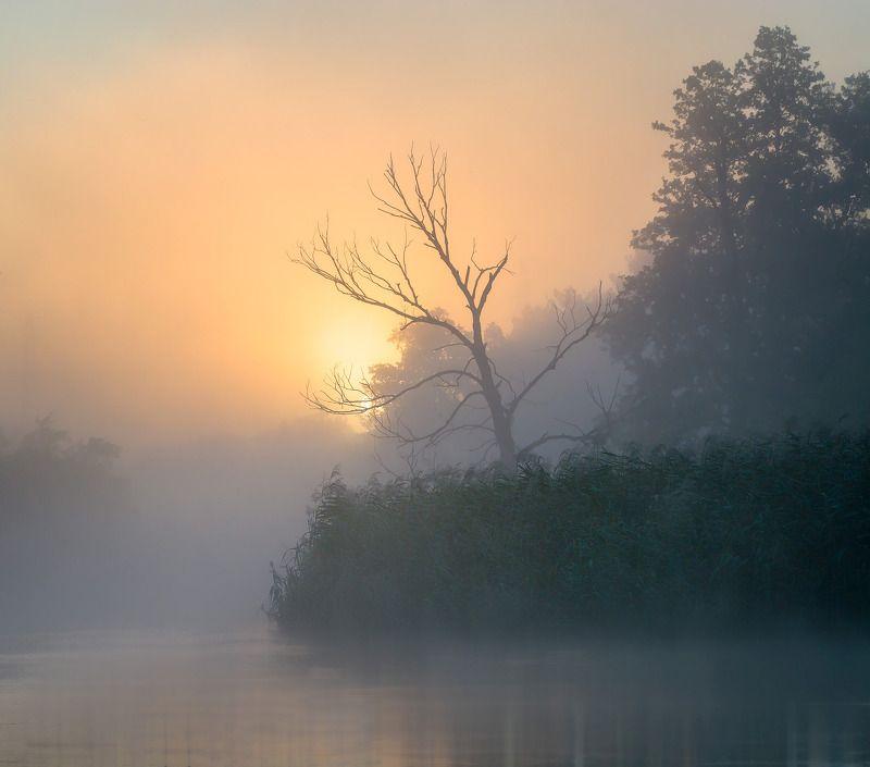 awakening,fog,sun,tree,water,river,gwda,nature,landscape,sky,mist,summer,  Awakening photo preview