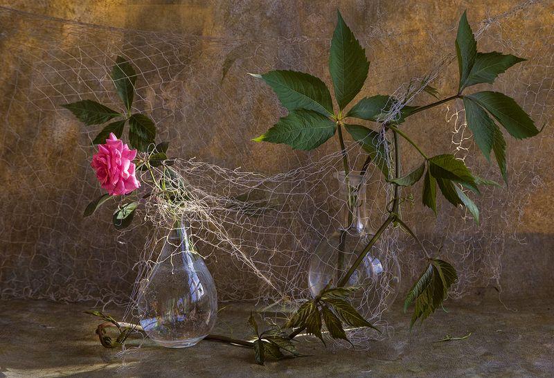 роза Узыphoto preview