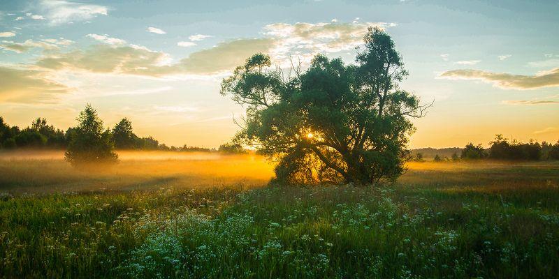 Одинокий в поле...photo preview