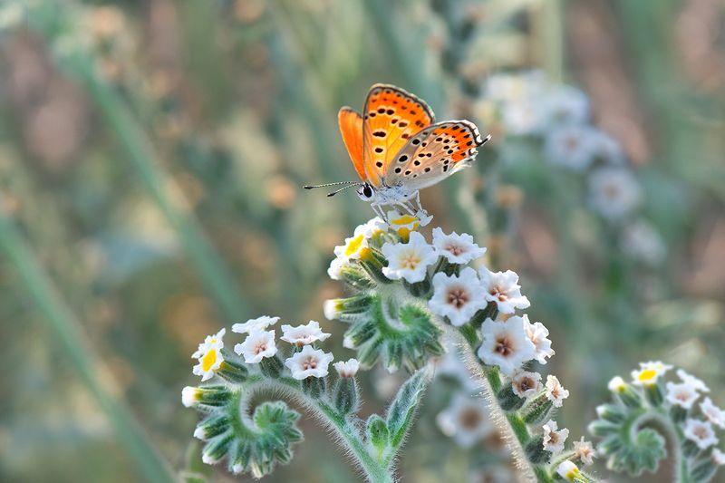 бабочка, цветы, июль Все параллельноphoto preview