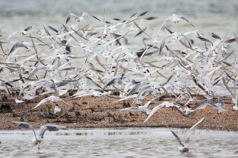 ритм, природа, птицы, море Ритмphoto preview