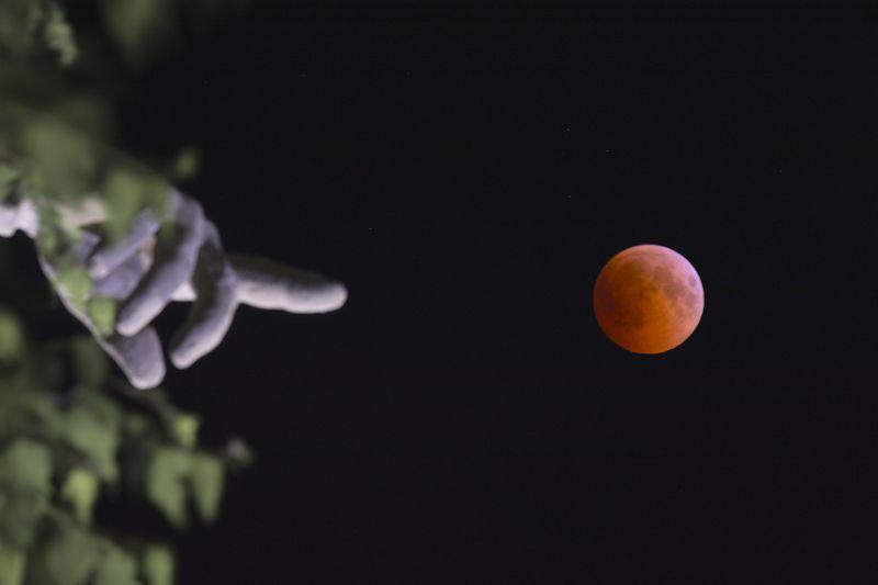 лунное затмение, lunar eclipse moon eclipse, затмение Лунное затмение на Мамаевом Курганеphoto preview