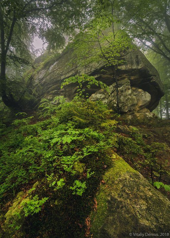 Хранитель леса. Покутские Карпаты.photo preview