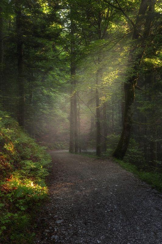 Прогулка по утреннему лесуphoto preview