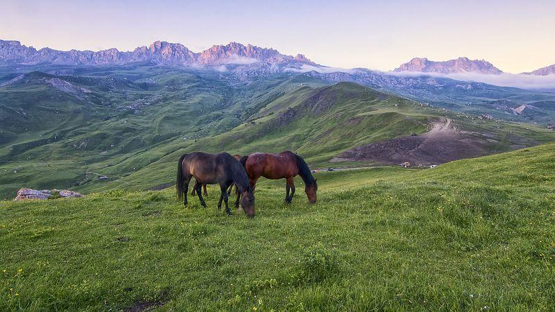 кавказ,горы,туман,лошади,палатка,внедорожник,стоянка пастухов. Дигория.photo preview