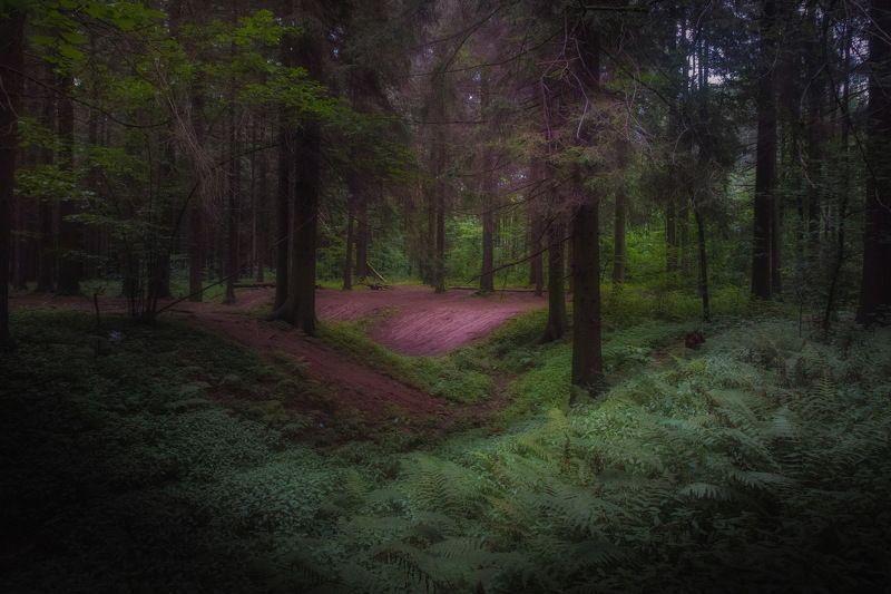 Прогулка в таинственном лесуphoto preview