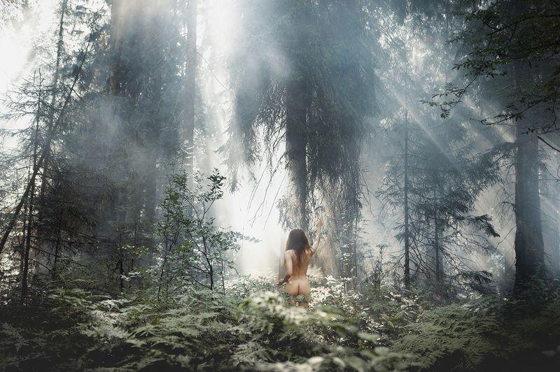лес, девушка, природа Наедине с природойphoto preview