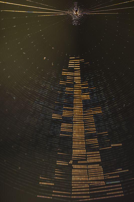 макро, паук, паутина, свет, радиогалактика, воронеж, Радиогалактикаphoto preview