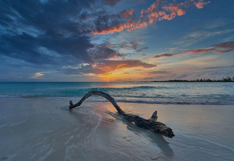 ocean, waves, sun, beach, sand, clouds, reflection, snag, океан, волны, солнце, пляж, песок, облака, отражение, коряга Playa Paraisophoto preview