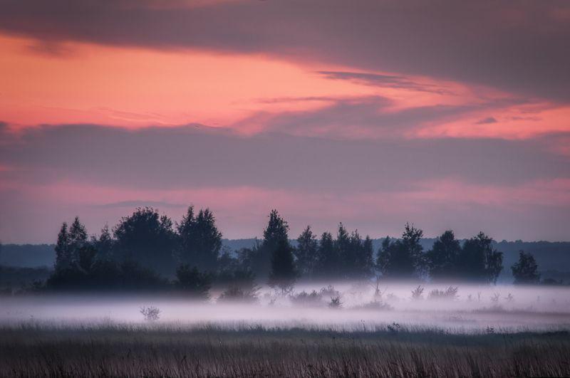 туман, закат, лес, природа, пейзаж, fog, sunset, forest, nature, landscape В объятиях туманаphoto preview