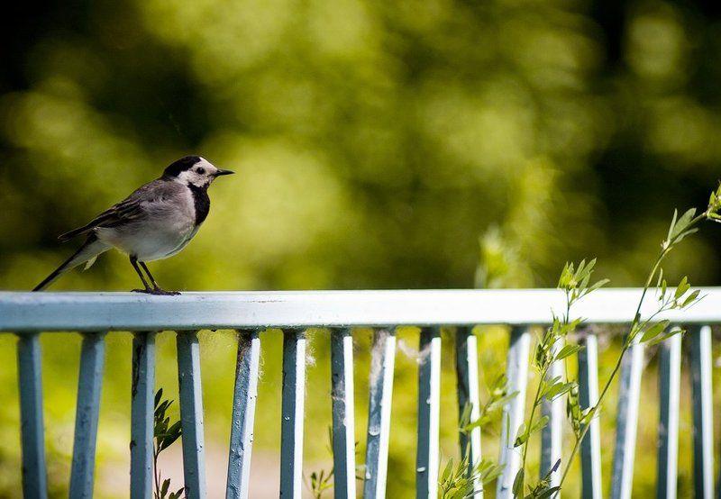 фауна, лето, природа, птица photo preview