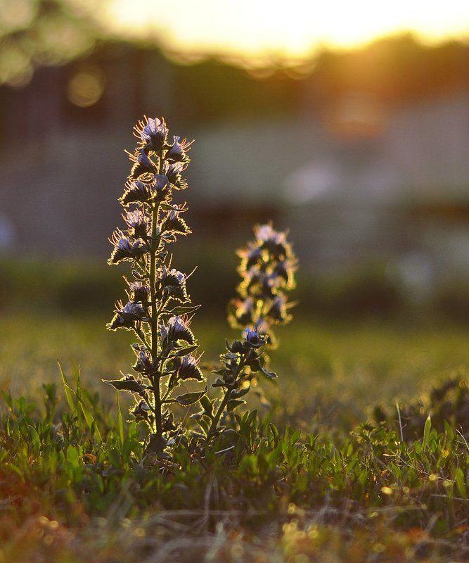 цветок, солнце, лучи photo preview