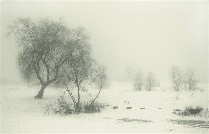 туман, зима photo preview