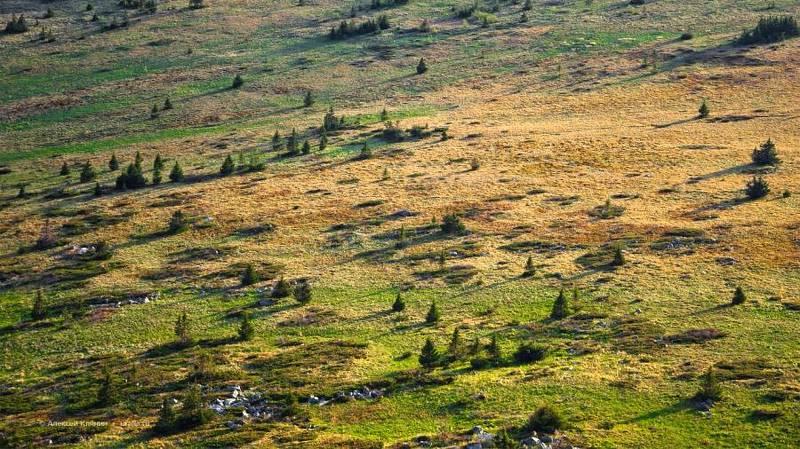 хребет, южный урал, зигальга, природа, горы, лето, елки, лес, плато photo preview