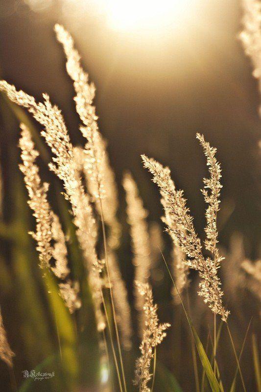 , небо, пух, лето, поле, красное, солнце, свет, закат, пейзаж, трава photo preview