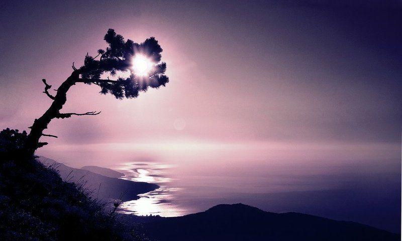 пейзаж, море, крым, солнце, дерево, рассвет photo preview