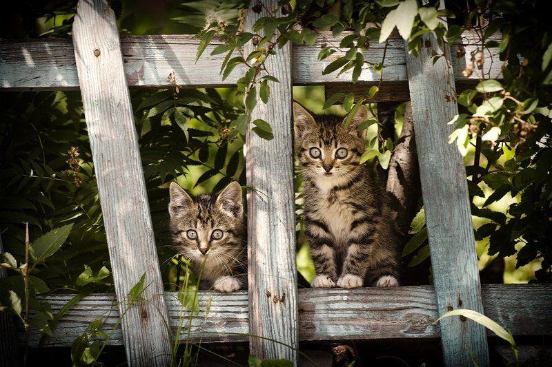 котёнок, кошка, животные, забор photo preview