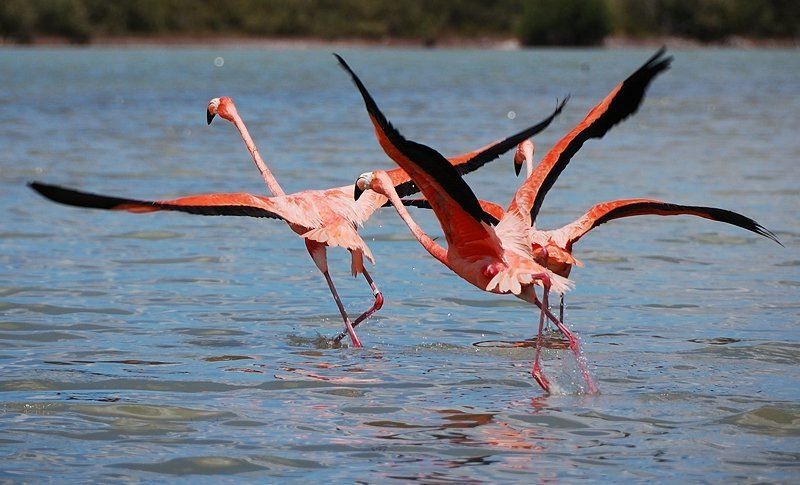 фламинго, мексика, юкатан, мексиканский залив Мир Фламингоphoto preview