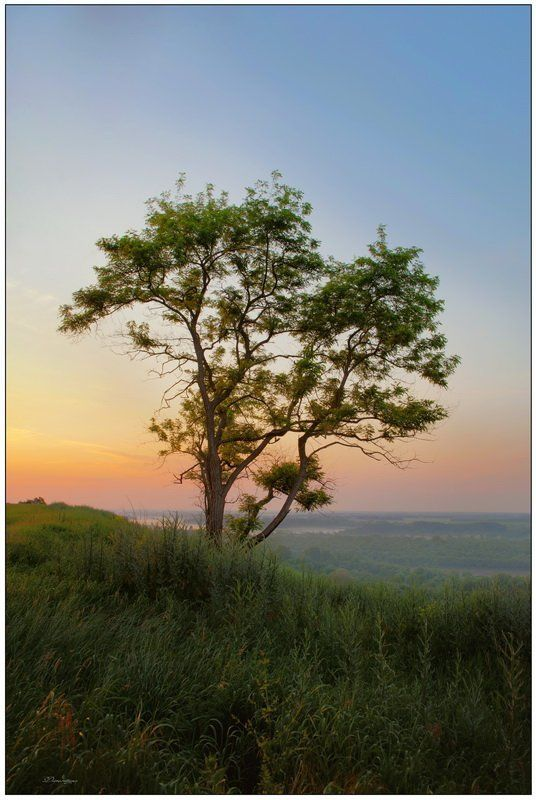 пейзаж, дерево, рассвет photo preview