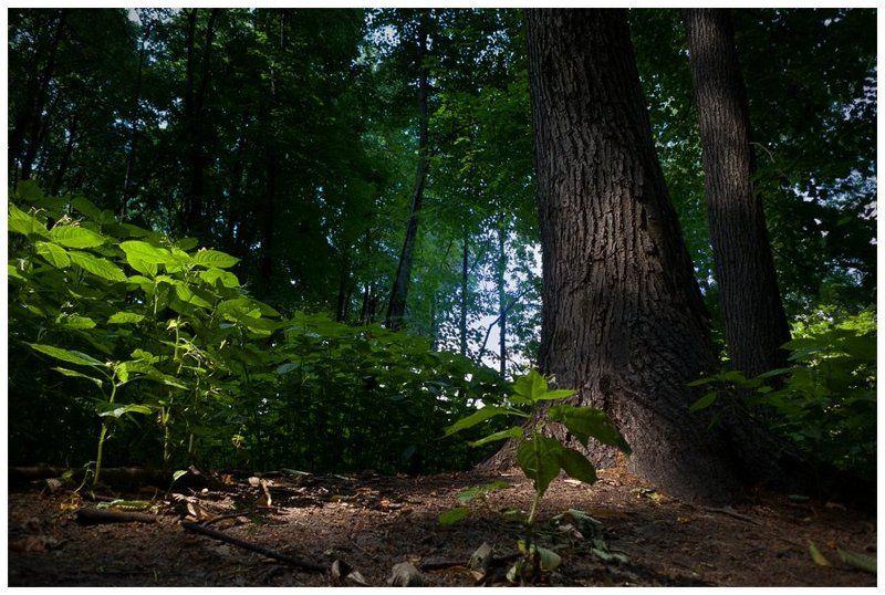 Свет и тень Нескучного садаphoto preview