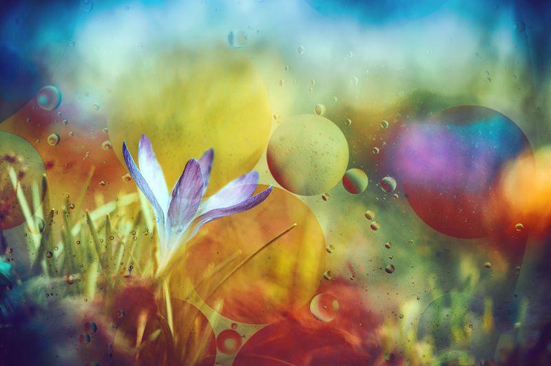 ...весенней радуги капель...photo preview