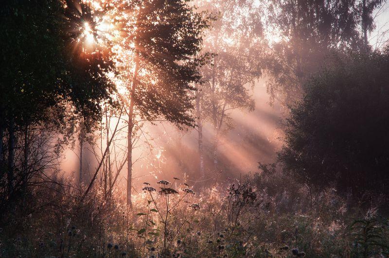природа, рассвет, туман, солнце, туман, пейзаж, nature, dawn, fog, sun, fog, landscape Утренний светphoto preview