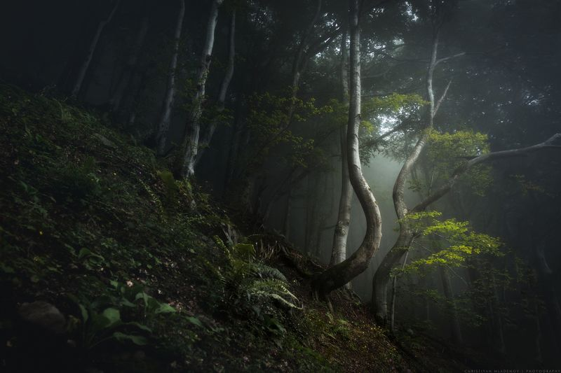 landscape, forest, tree, wide angle, fog, mist, mountain, woods, spring, bulgaria, nature, green, plant, weed, leafs, dream, panorama, woodland, gora, mountain, shapes, bizare, tale, magic, fantasy Вдън гората | Into the Woodsphoto preview