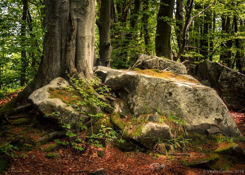 Пластика лесных камней. Покуття. Карпаты.photo preview
