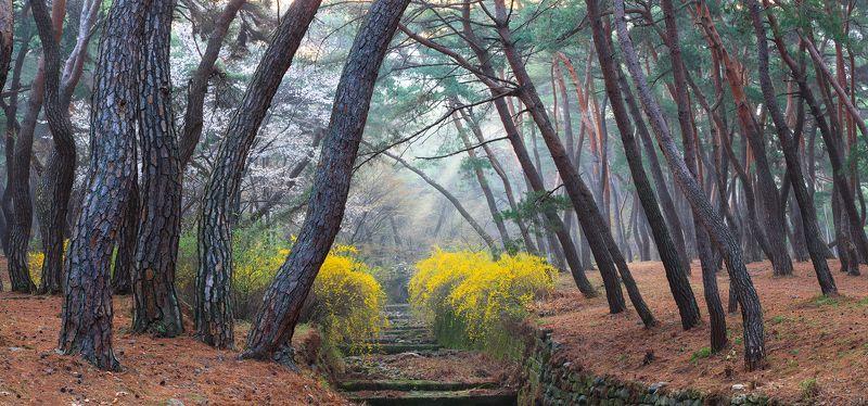 Spring of Samryungphoto preview