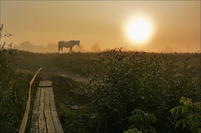 деревня, утро, туман, конь, солнце, роса, мостик Туманная рапсодияphoto preview